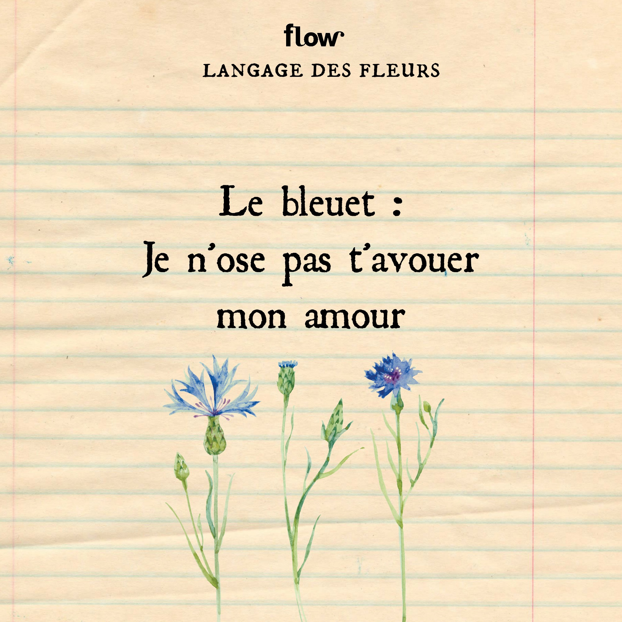 flow fleurs bleuet
