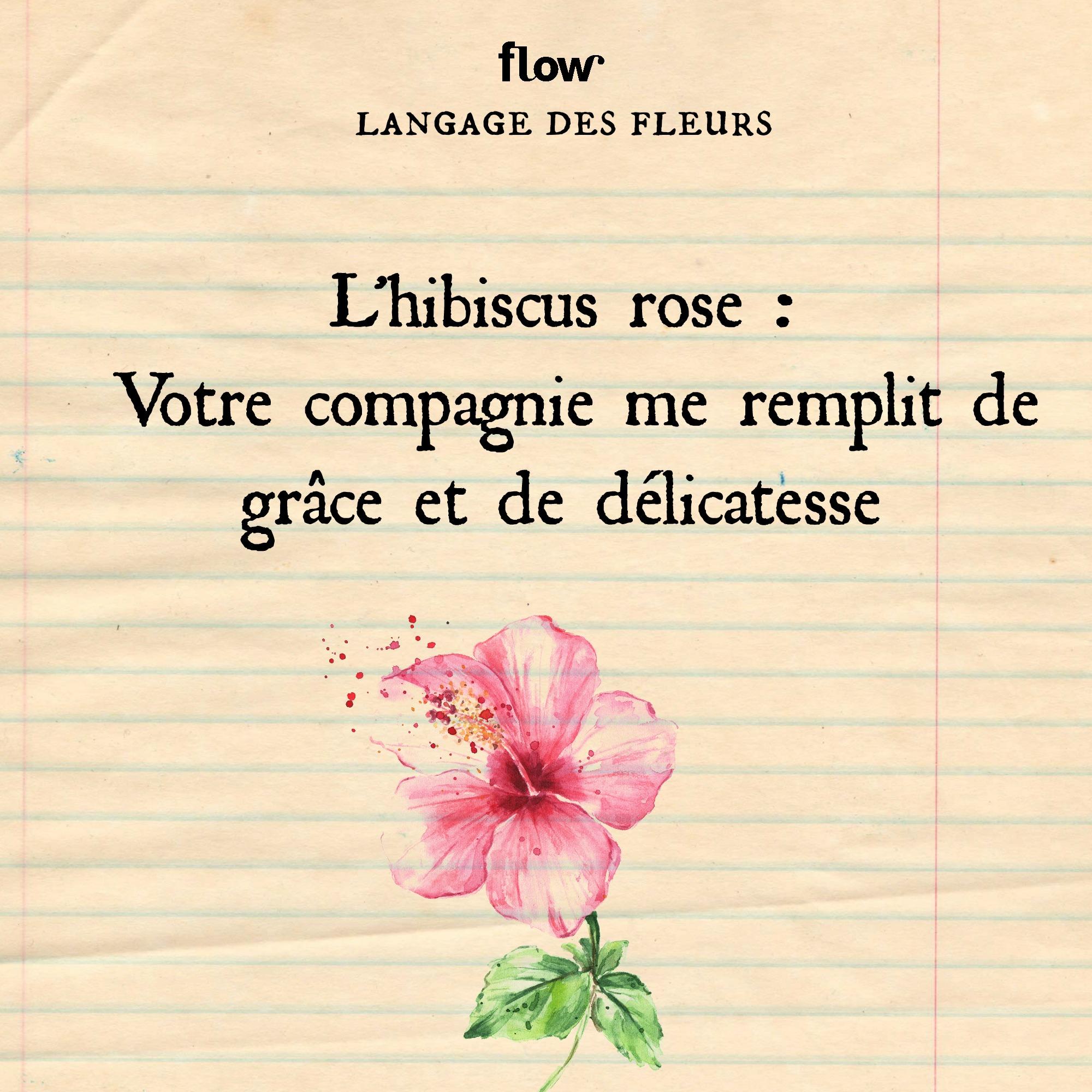 flow fleurs hibiscus