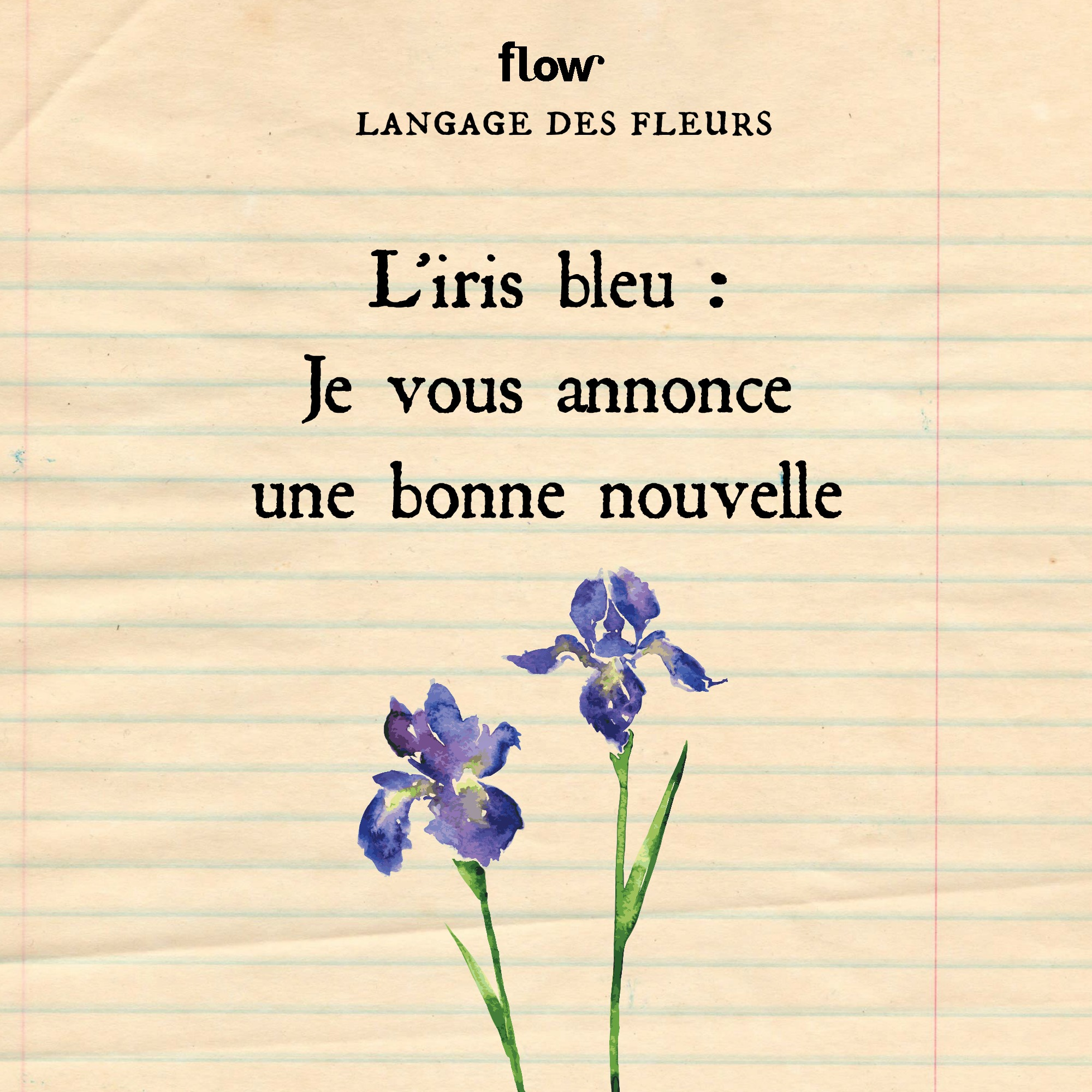 flow fleurs iris