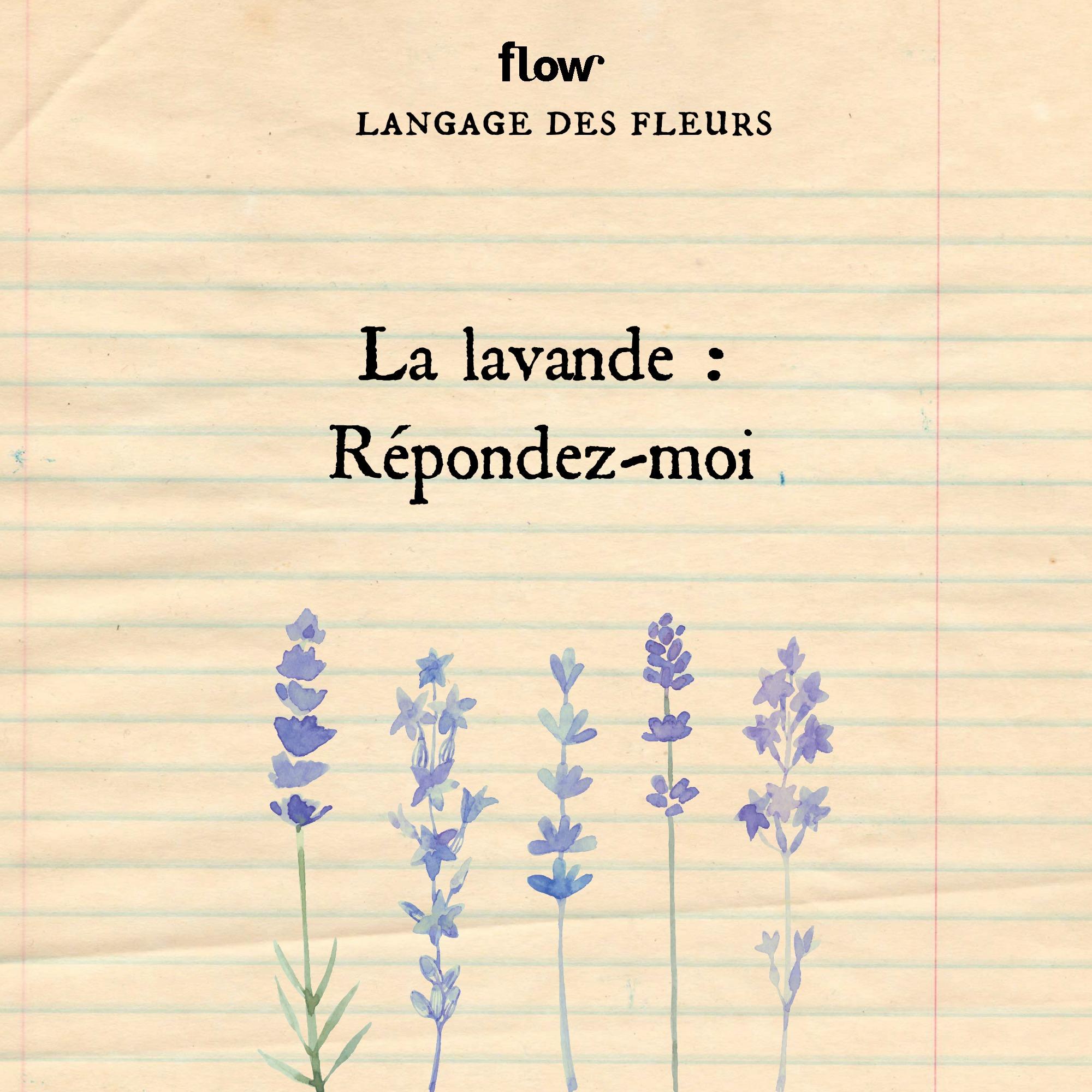 flow fleurs lavande