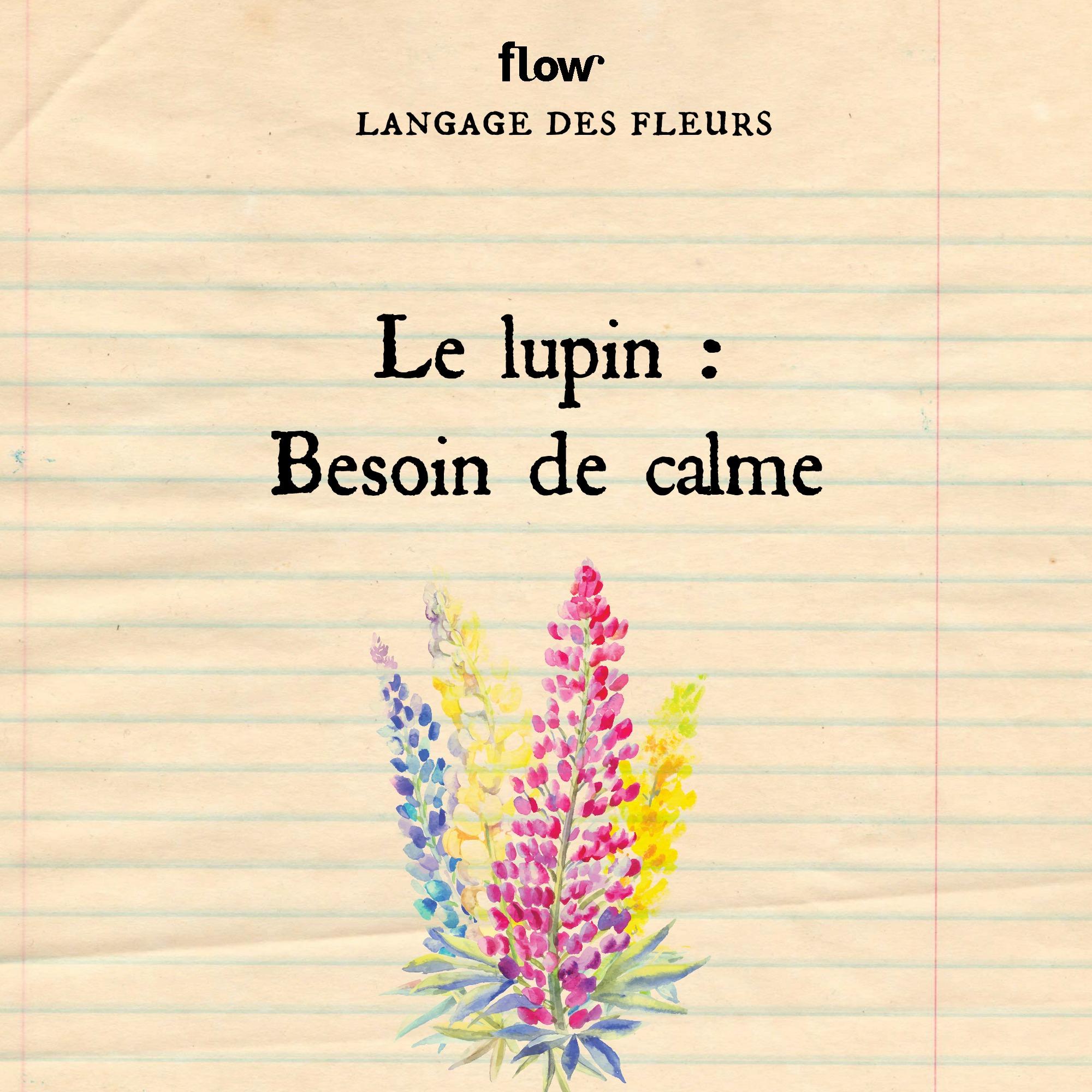 flow fleurs lupin