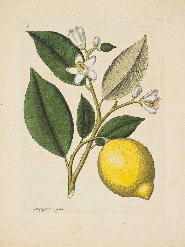 Hagströmer Medico-Historical Library lemon
